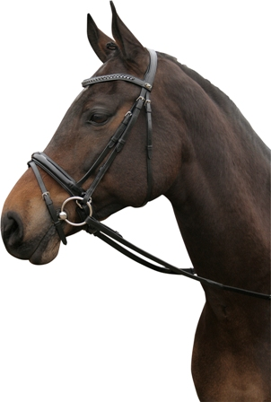 Harry's Horse® Hoofdstel 'Silver line Laque' cob