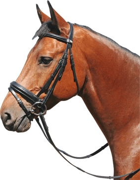 Harry's Horse Hoofdstel Gold line met brede aansnoerneusriem messing maat full