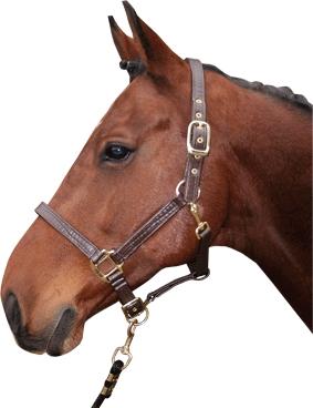 Harry's Horse Lederlook halster Bronze line Croco cob