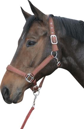Harry's Horse halsterset streep chesnut cob