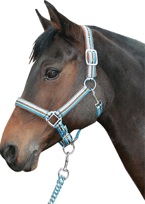 Harry's Horse halsterset streep blue sapphire maat pony