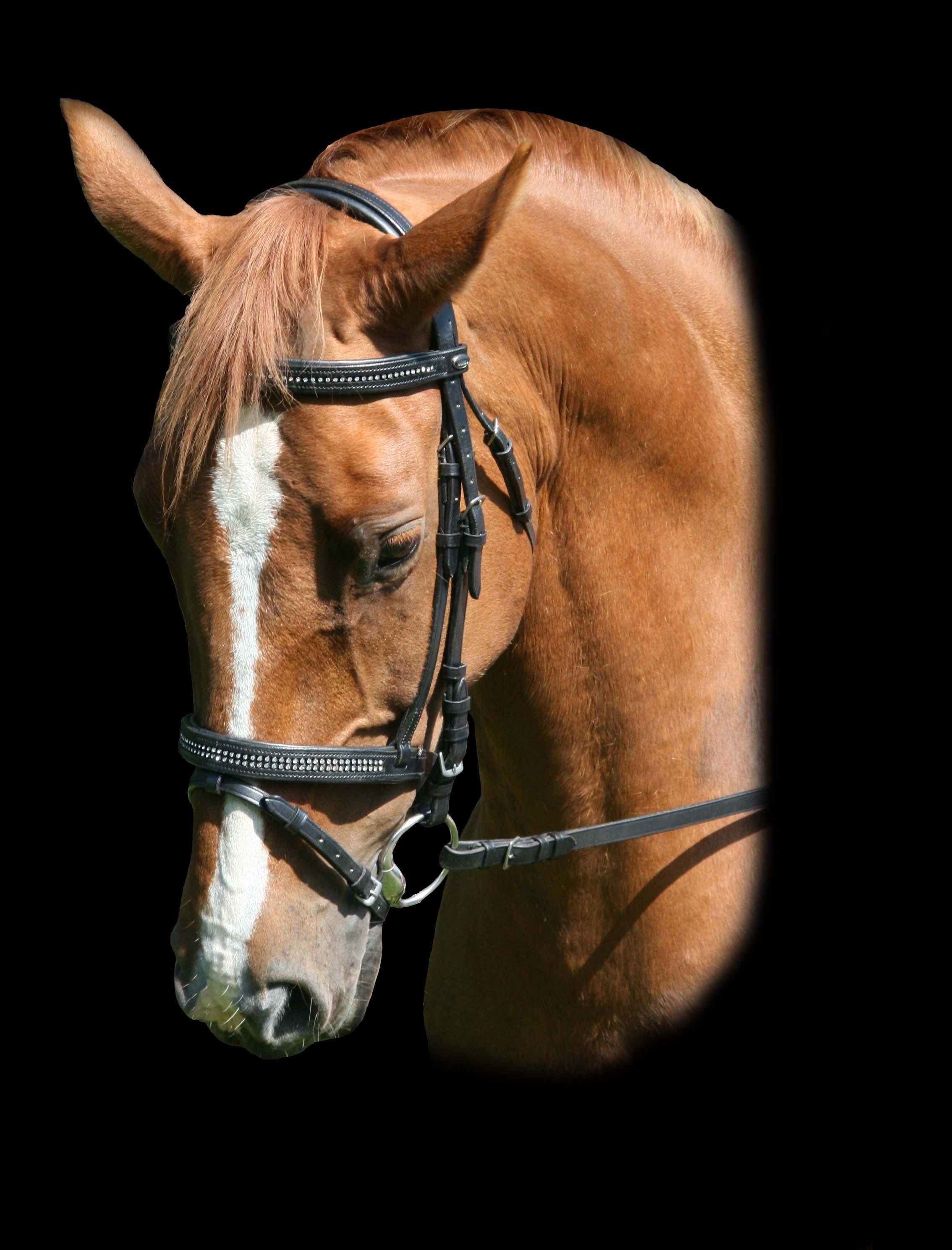 DHH Hoofdstel met diamantjes in neus- en frontriem shet pony cob