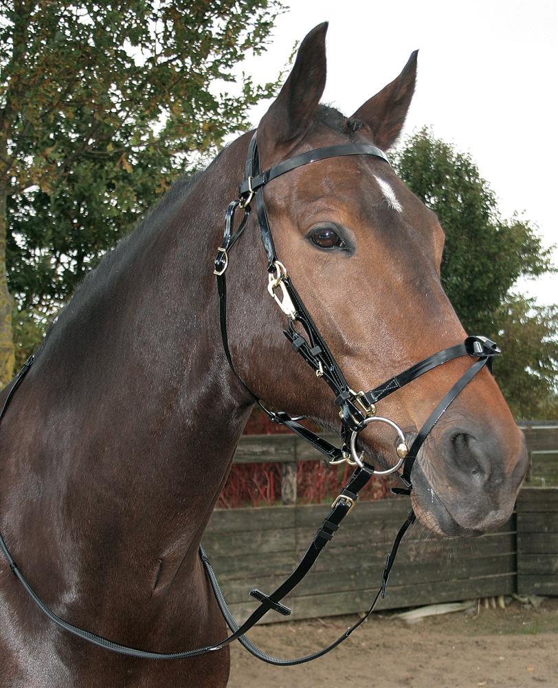 Hoofdstel TPU endurance zwart pony cob full