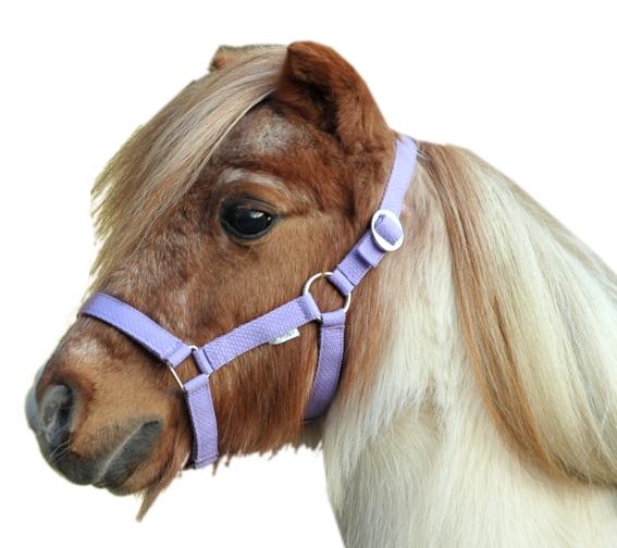 Mini-Shett halster