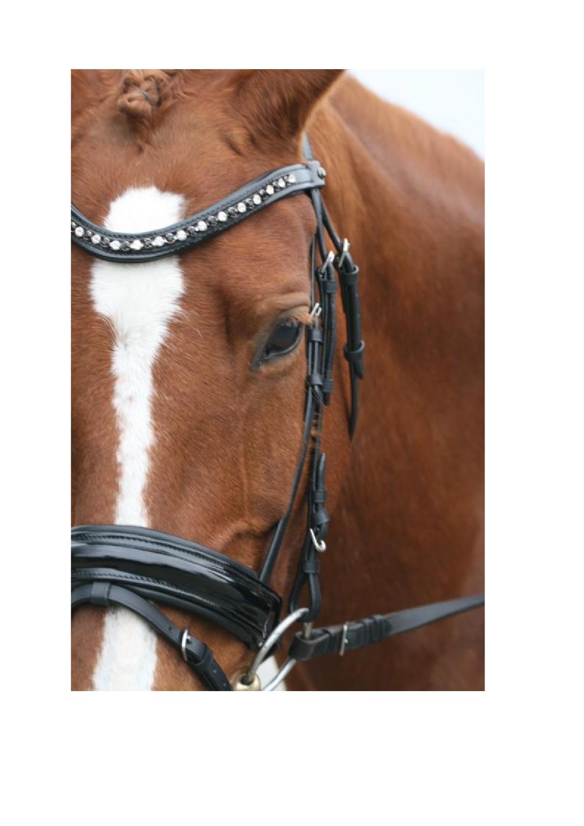 Dhh leren lakfrontriem met swarovski pony cob