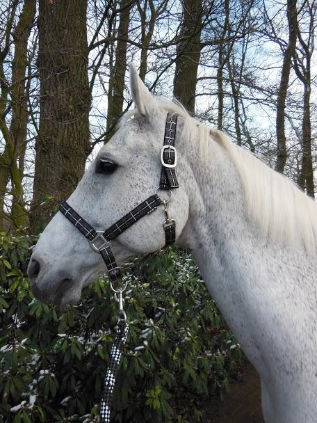 Horka Halsterset check zwart pony cob xtra full
