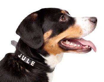 Hkm honden halsband voor sierletters