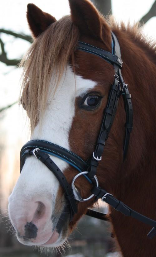 DHH Hoofdstel Lilo blauw pony